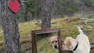 Peilinä luonto
