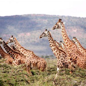 Joogamatka Afrikkaan